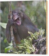 Rhesus Laughing Wood Print