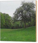 Rhineland-palatinate Summer Meadow Wood Print
