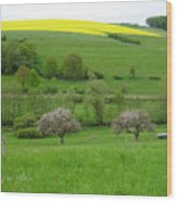 Rhineland-palatinate Summer Meadow With Cherry Trees Wood Print