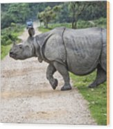Rhino Crossing Wood Print