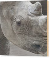 Rhinoceros Wood Print by Tom Mc Nemar