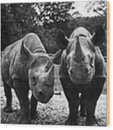 Rhinoceroses Wood Print