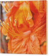 Rhodies Art Prints Orange Rhododendron Flowers Baslee Troutman Wood Print