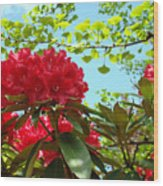 Rhodies Art Prints Red Rhododendron Floral Garden Landscape Baslee Wood Print