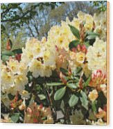 Rhodies Flowers Art Yellow Orange Rhododendrons Garden Wood Print