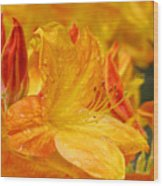 Rhodies Orange Yellow Rhododendrons Art Prints Canvas Baslee Troutman Wood Print