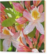 Rhodies Pink Orange Yellow Summer Rhododendron Floral Baslee Troutman Wood Print