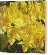 Rhodies Yellow Rhododendrons Art Prints Baslee Troutman Wood Print