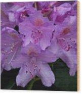 Rhododendren Wood Print