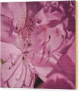 Rhododendron-close Up Wood Print