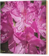 Rhododendron-close Up1 Wood Print