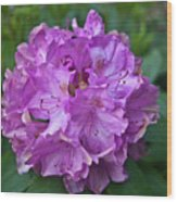 Rhododendron Elegance Wood Print
