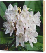 Rhododendron Family Of Flowers Wood Print