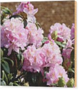 Rhododendron Flower Garden Art Prints Canvas Pink Rhodies Baslee Troutman Wood Print