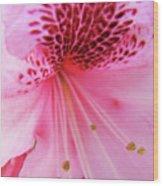 Rhododendron Flower Macro Pink Rhodies Baslee Troutman Wood Print