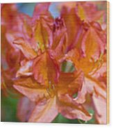 Rhododendron Flowers Wood Print