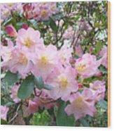 Rhododendron Flowers Garden Art Prints Floral Baslee Troutman Wood Print
