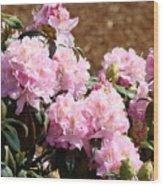 Rhododendron Garden Art Print Pink Rhodies Flowers Baslee Troutman Wood Print