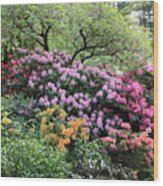 Rhododendron Hill Wood Print