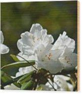 Rhododendron II Wood Print