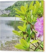 Rhododendron On Lake Kylemore, Kylemore Abbey Galway Wood Print