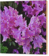 Rhododendron Pink Wood Print