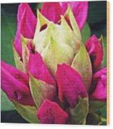 Rhododendron Velvet    Wood Print