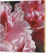 Rhododendrons Art Prints Floral Pink Rhodies Canvas Baslee Troutman Wood Print