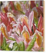 Rhododendrons Floral Art Prints Canvas Pink Orange Rhodies Baslee Troutman Wood Print
