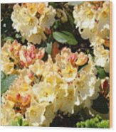 Rhododendrons Garden Art Prints Creamy Yellow Orange Rhodies Baslee Wood Print