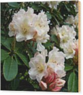 Rhododendrons II Wood Print
