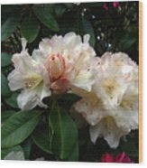 Rhododendrons IIi Wood Print