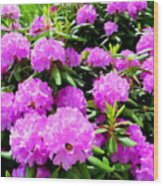 Rhododendrons In Bloom Wood Print