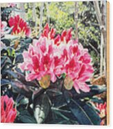 Rhododendrons Of British Properties Wood Print by David Lloyd Glover