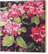 Rhododendrons Rothschild Wood Print