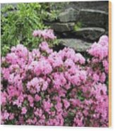 Rhododendrons Wood Print