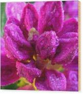 Rhododendrum Wood Print