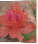 Rhododendrum Oldhamii Wood Print