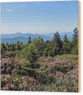 Rhododendron On Roan Mountain Wood Print