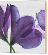 Rhody Ballet-purple Wood Print