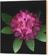 Rhody Queen - Red Wood Print