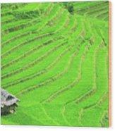 Rice Field Terraces Wood Print