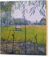 Rice Fields At Bumi Agung Lampung Sumatra Indonesia 2008  Wood Print