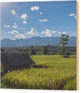 Rice Fields Of Thailand Wood Print