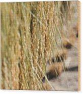 Rice Harvest Wood Print