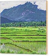 Rice Paddies And Mountains Wood Print