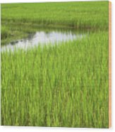 Rice Paddy Field In Siem Reap Cambodia Wood Print by Julia Hiebaum