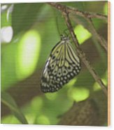 Rice Paper Butterfly Clinging To A Tree Branch Wood Print