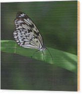 Rice Paper Butterfly On A Long Daylily Leaf Wood Print