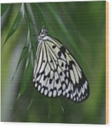 Rice Paper Butterfly Sitting On Green Foliage Wood Print